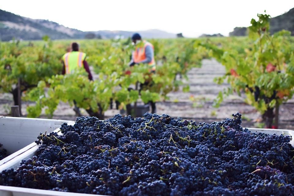 Rượu vang California Cabernet Sauvignon vintage 2013 – niềm tự hào vang Mỹ